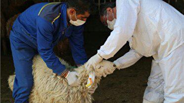 مرکز کشتار بهداشتی دام در البرز