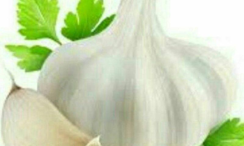 سیر بهترین درمان قندخون