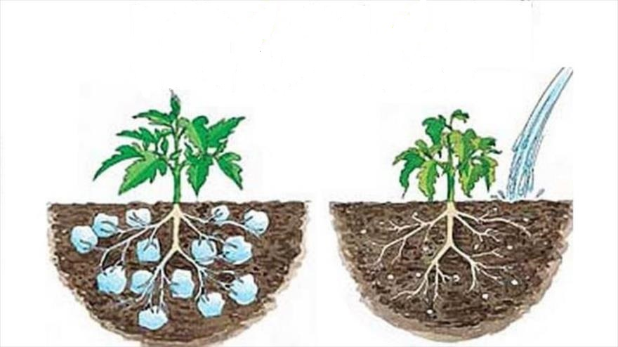 سوپر جاذب کشاورزی