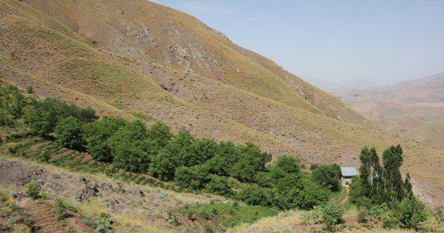 ♦️توسعه باغات در اراضی شیبدار البرز