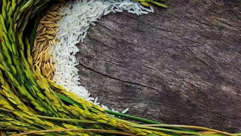 تکمیل نقشه سه بعدی ژنوم برنج توسط چینی ها