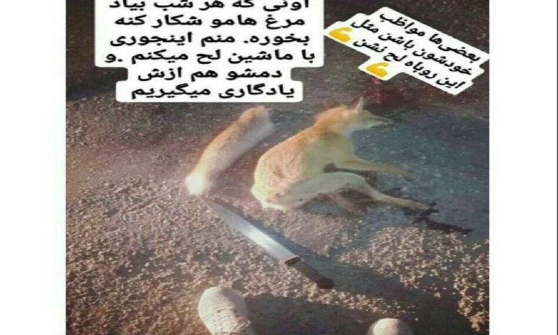 نشردهنده عکس روباه شکار شده در فضای مجازی تحت پیگرد قرار گرفت