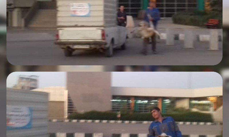 جمع آوری سگ های بلاصاحب در متروی گلشهر