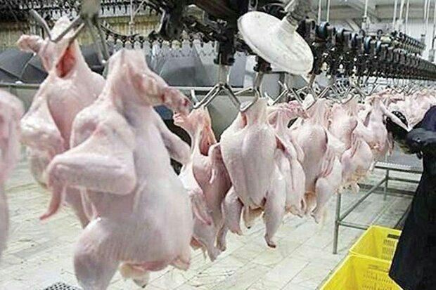 درج سطح کیفی مرغ های تولیدی در البرز