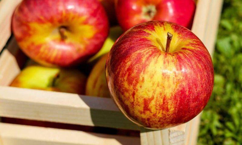 سیب بخورید