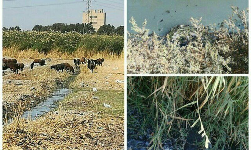 تولید محصولات کشاورزی آلوده به عوامل های میکروبی و شیمیایی در استان البرز