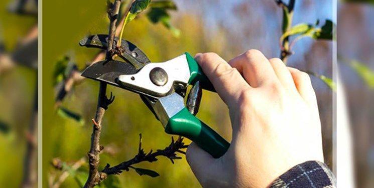 ️اجرای طرح رسیدگی بالینی به درختان در کرج