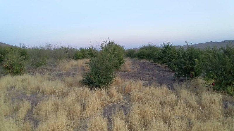 ️ رونق کشاورزی اشتهارد با اجرای طرحهای آبخیز داری