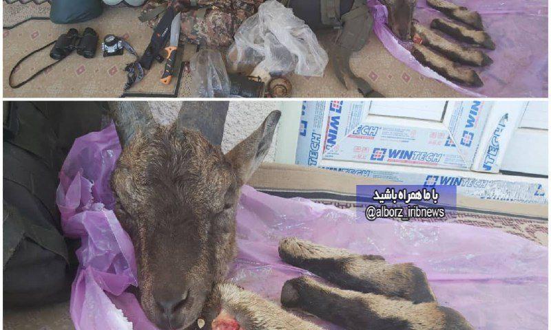 ️ دستگیری شکارچی متخلف در طالقان