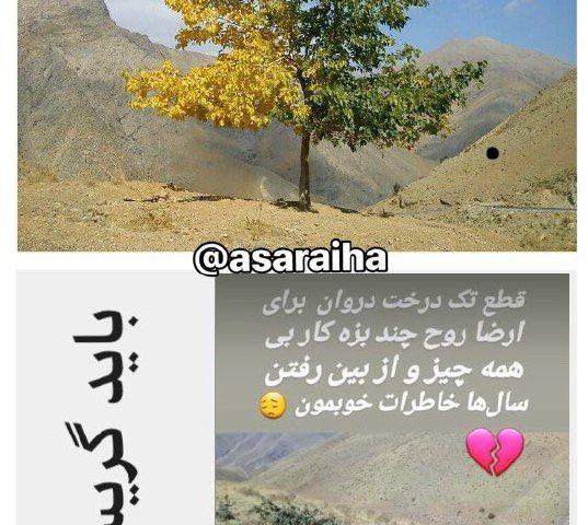 عکس یک درخت توت در روستاى دروان
