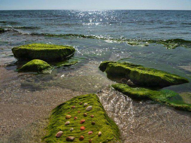 ساحل خلیج فارس پارسیان ه