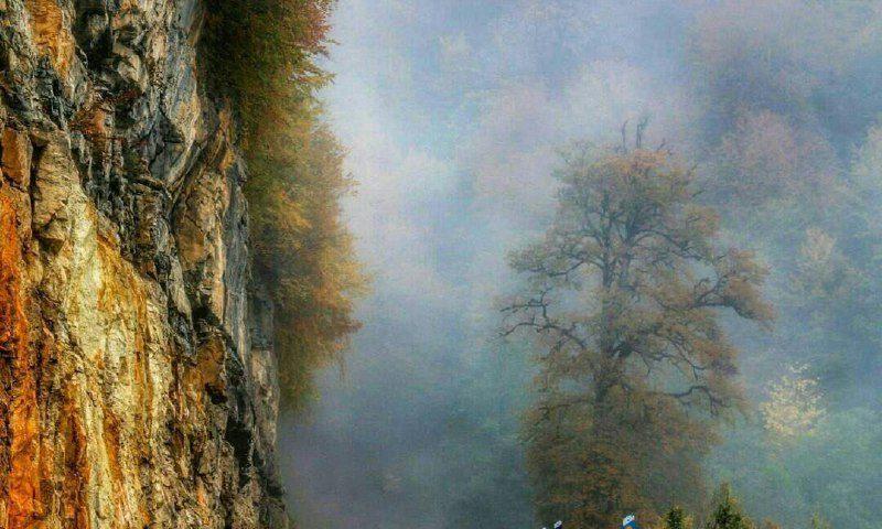 اینجا ایران است  جنگل دالخا