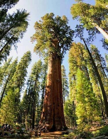درختی می افتد همه متوجه صدای ا