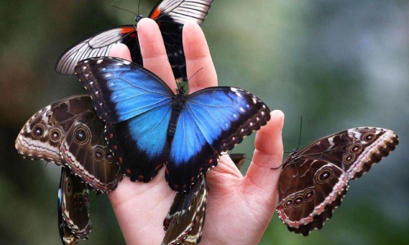 جالب بدونید ، پروانهها جزو مع